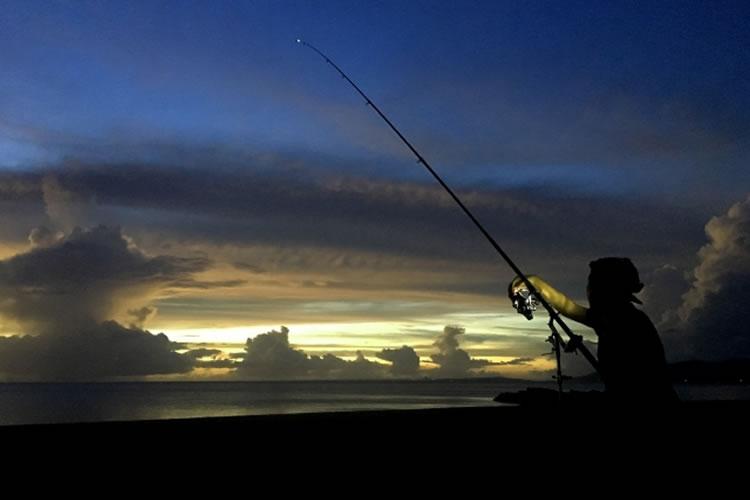 サーフやゴロタ浜ではブレイクに沿って回遊している