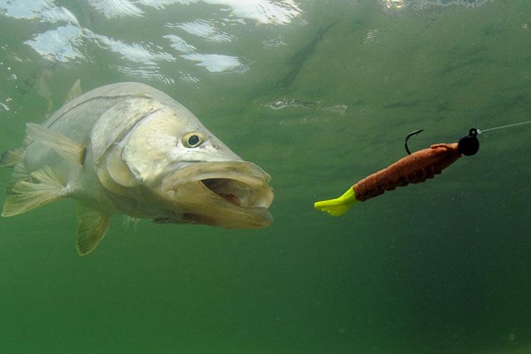 ルアーで釣れる主な魚