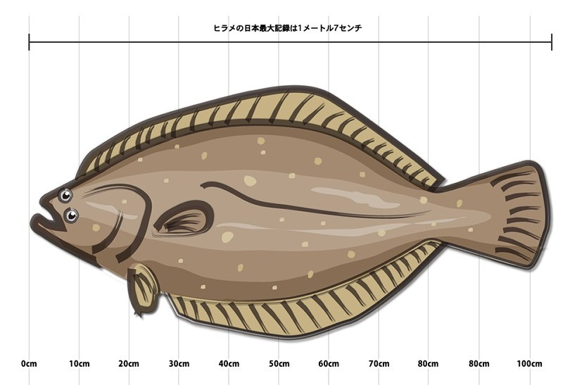 ヒラメの日本最大記録は1メートル7センチ