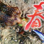 春にアオリイカをエギングで釣る方法