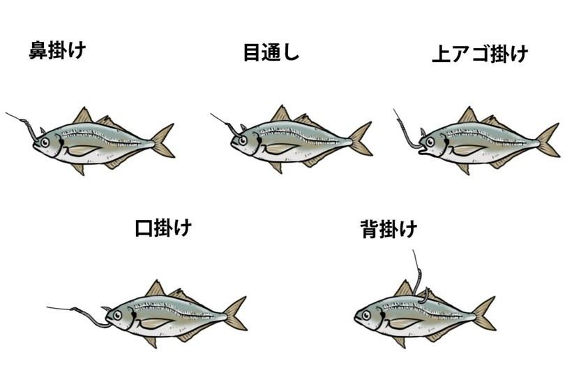 5つの生き餌のつけ方