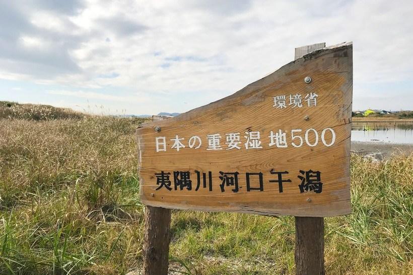 夷隅川河口干潟