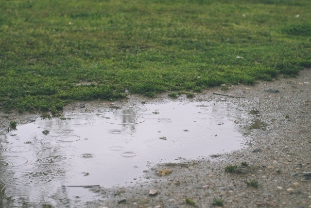 雨の日でも後でもアオリイカは釣れる理由