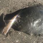 ヒラメやマゴチの釣れる主な6つの時間帯(時合)