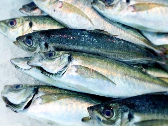 アジなどが釣れる漁港を狙う