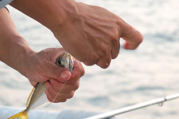 泳がせ釣りの生き餌のつけ方とコツ