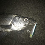 ナイトゲーム(夜釣り)でのヒラスズキの釣り方