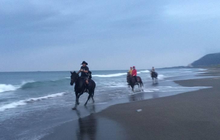 運が良いと海岸を走る乗馬風景が見れる