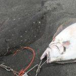 サーフでのヒラメやマゴチの26の釣り方