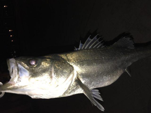 桑村孝さん流のシーバスの釣り方を学べる動画