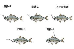 生き餌のつけ方(泳がせ釣り)