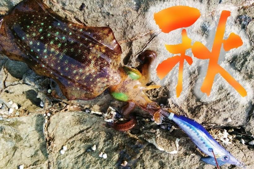 数釣りエギングで秋のアオリイカを攻略