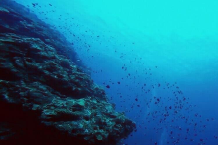 真冬のヒラスズキ攻略は浅場よりも深場