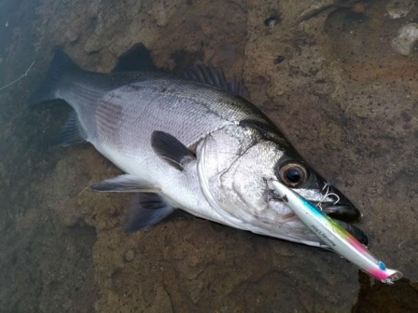 冬はタイトに攻めれば釣果を伸ばせる